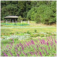 有機栽培ハーブ園