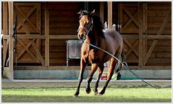 約一万平方メートルの広い馬場の中で、馬と触れ合ってみませんか