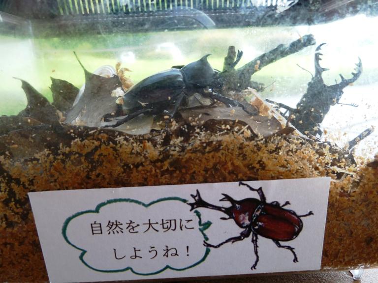 カブトムシやクワガタ