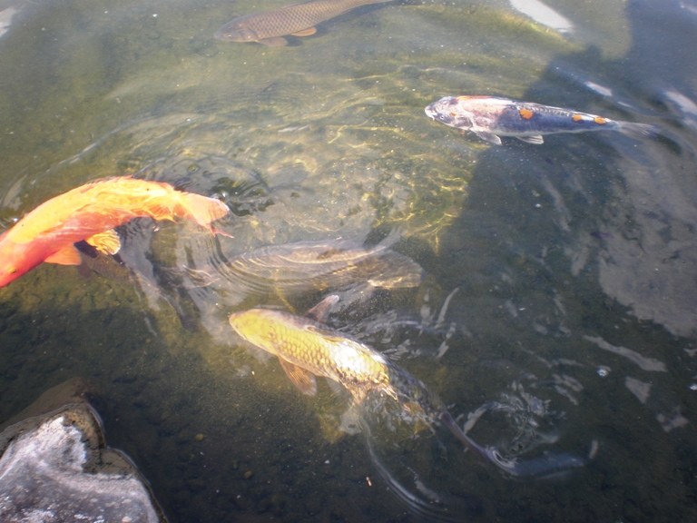 センタープレイス横の池