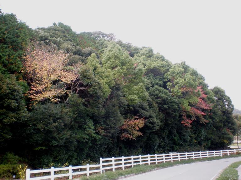 ブルーベリーヒルの紅葉