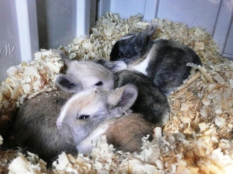 仔ウサギが生まれました!