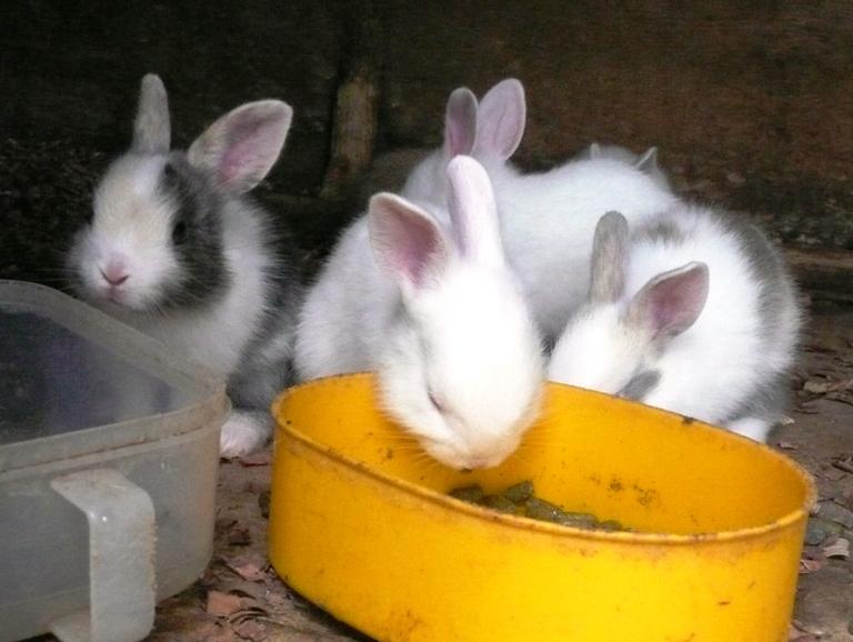 動物ふれあい広場の仔ウサギ