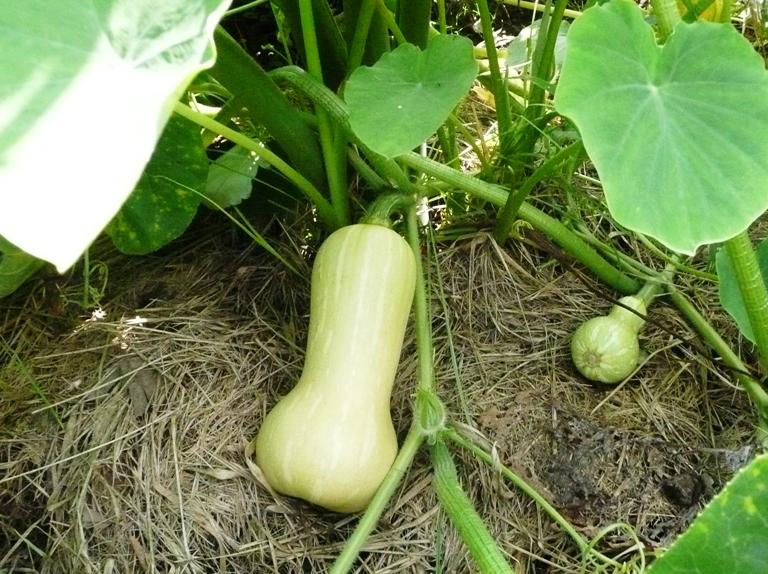 農園の野菜