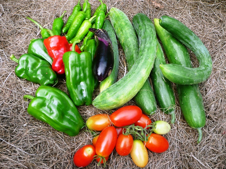 農園で収穫された夏野菜