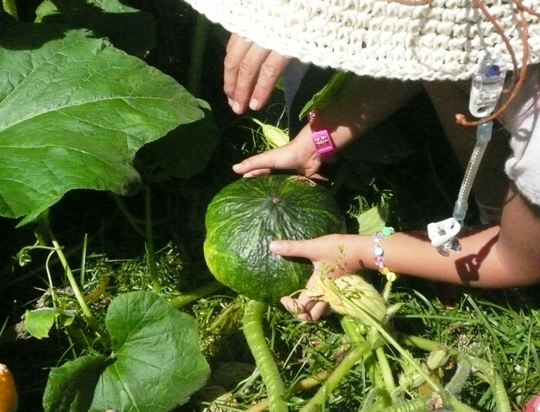 農園のかぼちゃ