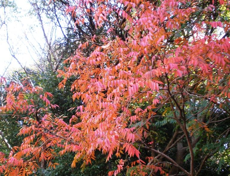 ブルーベリーヒルの木々