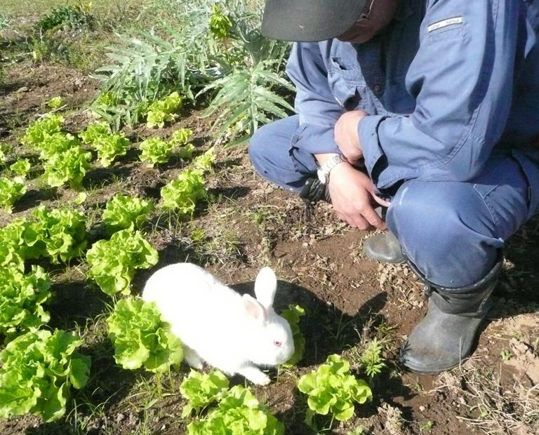ウサギのお散歩
