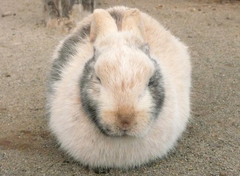 ウサギたちも丸くなります!