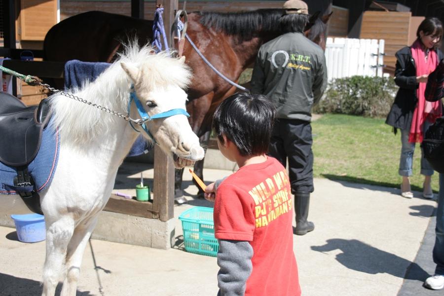 馬とふれあう日②