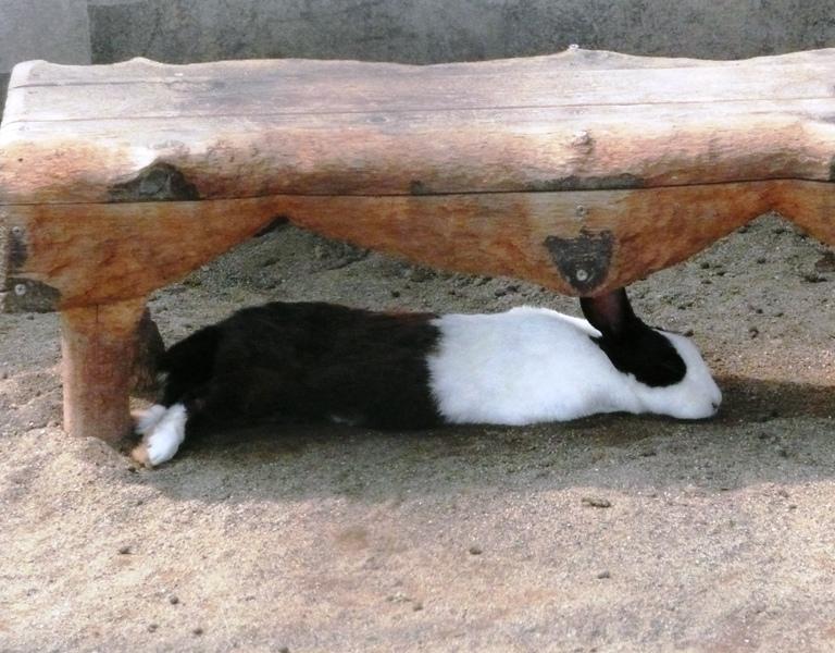 いつもは元気なウサギたちも