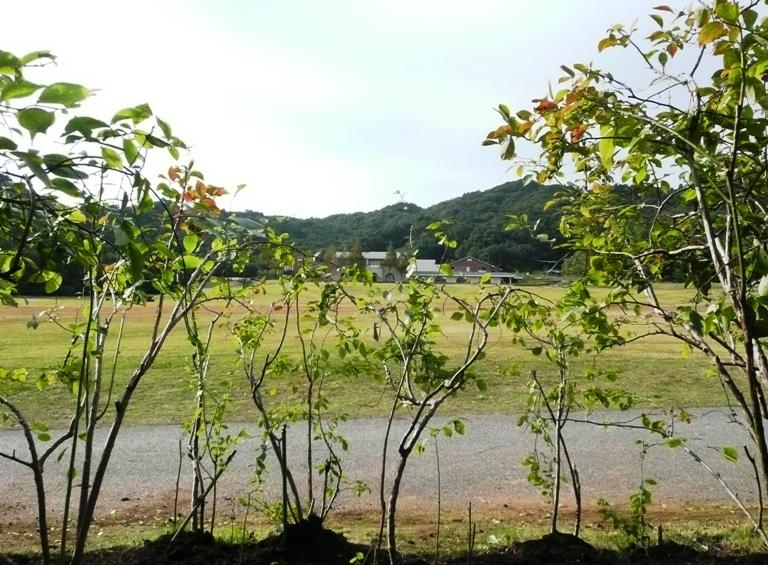 現在のブルーベリー畑
