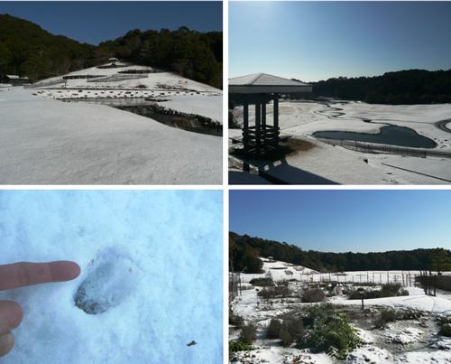 様々な雪景色