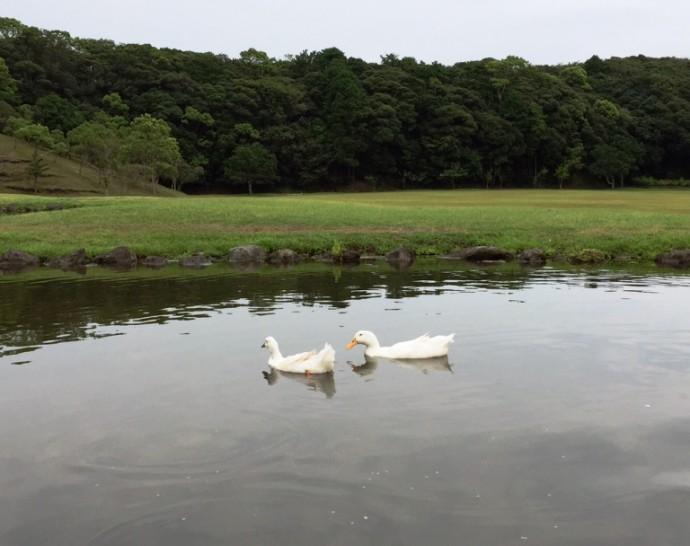 「~ハートの池とアヒルさん~」