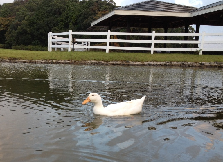 「9月24日 ~ プール横の池にて ~ 」
