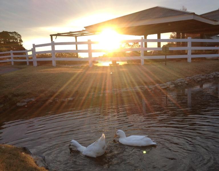 「12月17日 ~ 屋外プール横の池にて ~ 」