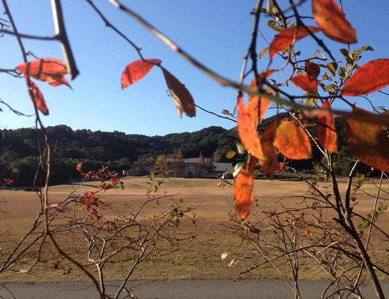 「11月30日 ~ ブルーベリー畑からの景色 ~ 」