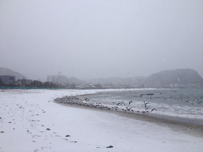 「2月14日 ~ 興津海水浴場 ~ 」