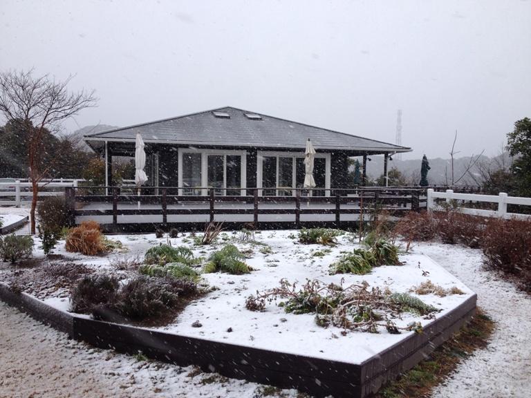 「2月14日 ~ 雪が積もり始めたキッチンガーデン ~ 」