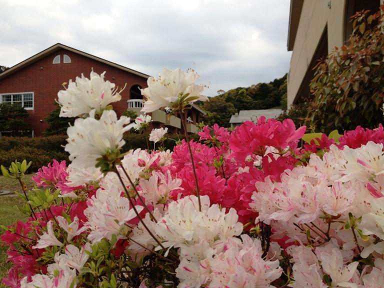「4月21日 ~ツツジが咲き始めました!~」