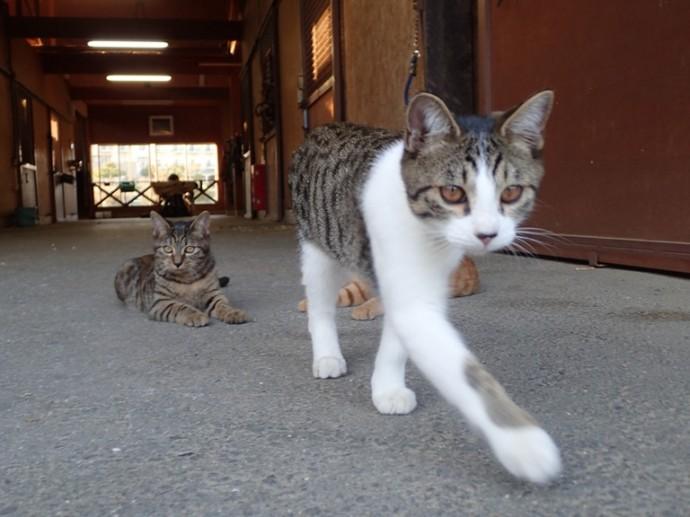 「10月18日 ~ ライディングスクエアより猫ちゃん ~ 」
