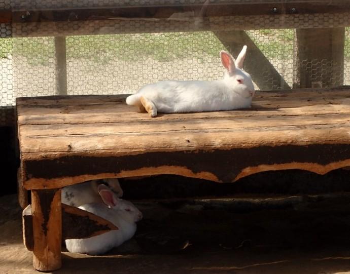 「5月1日 ~ 本日のウサギさん ~ 」
