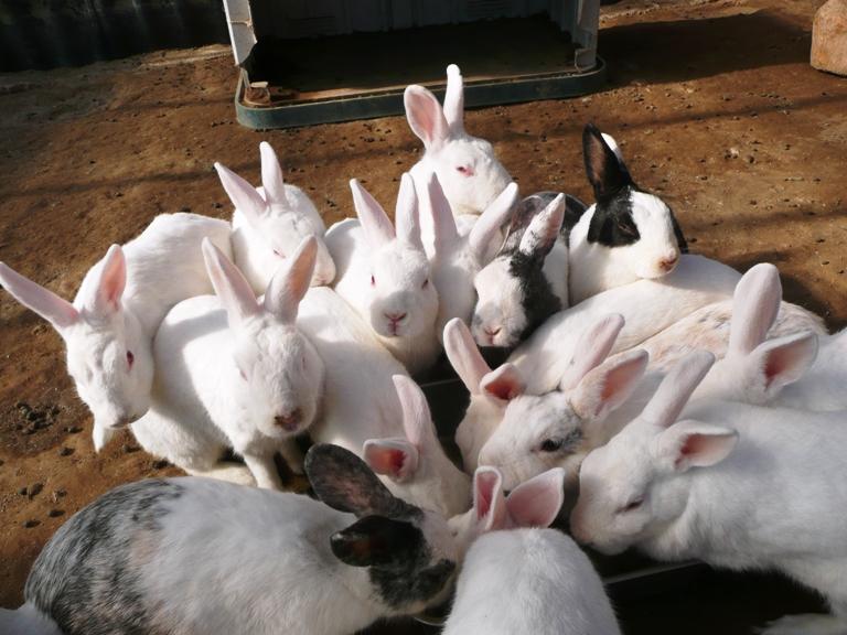 「10月11日 ~ 動物ふれあい広場のウサギさん ~ 」