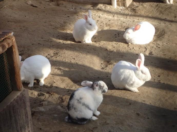 「10月18日 ~ 小屋のウサギさん ~ 」