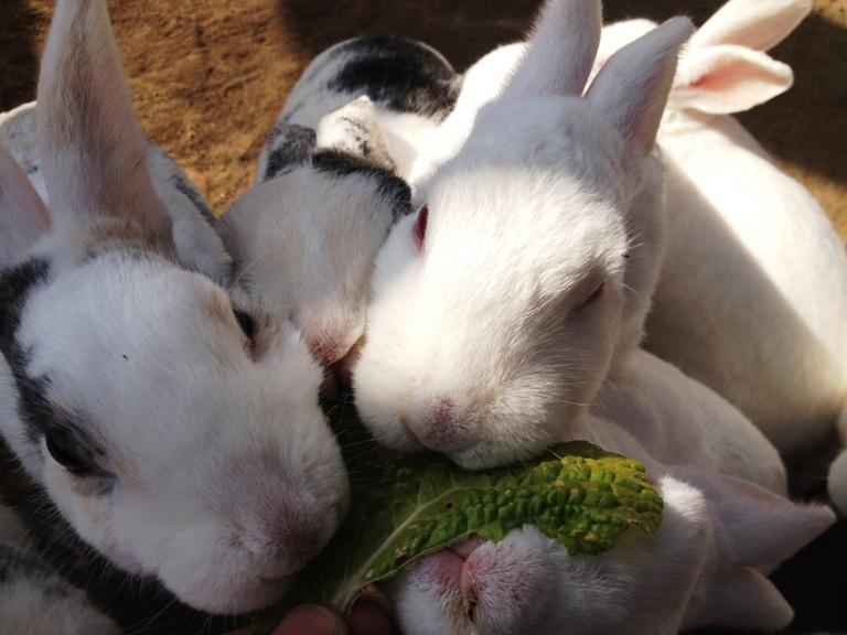 「2014年1月22日 ~ 動物ふれあい広場のウサギたち ~ 」