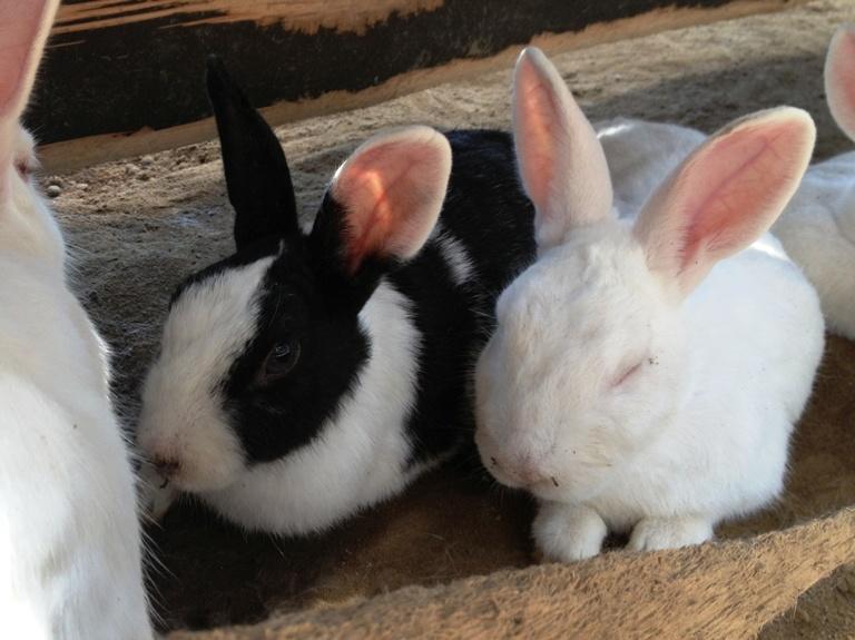 「9月12日 ~ 本日のウサギたち ~ 」