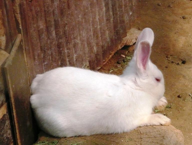 「5月11日 ~動物ふれあい広場のウサギ~」