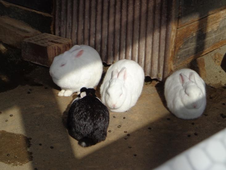 「12月23日 ~ 丸くなるウサギたち ~ 」