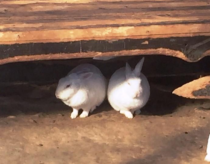 「1月18日 ~ 本日のウサギさん ~ 」
