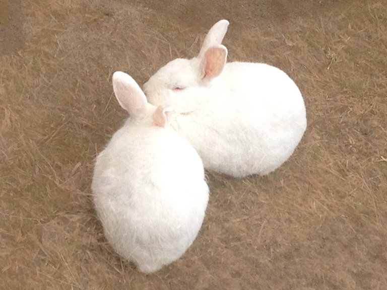 「2月11日 ~ 小屋の中のウサギさん ~ 」