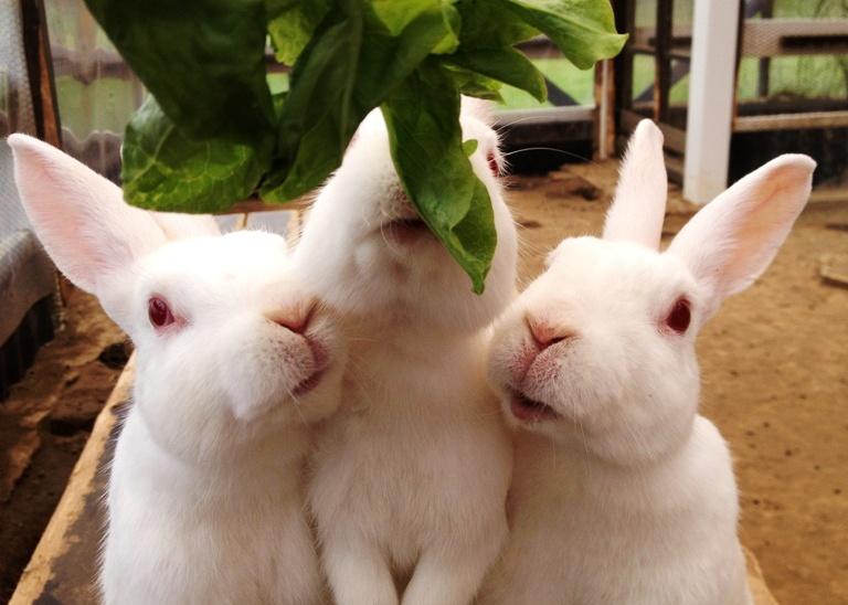 「6月22日 ~ウサギさん~」