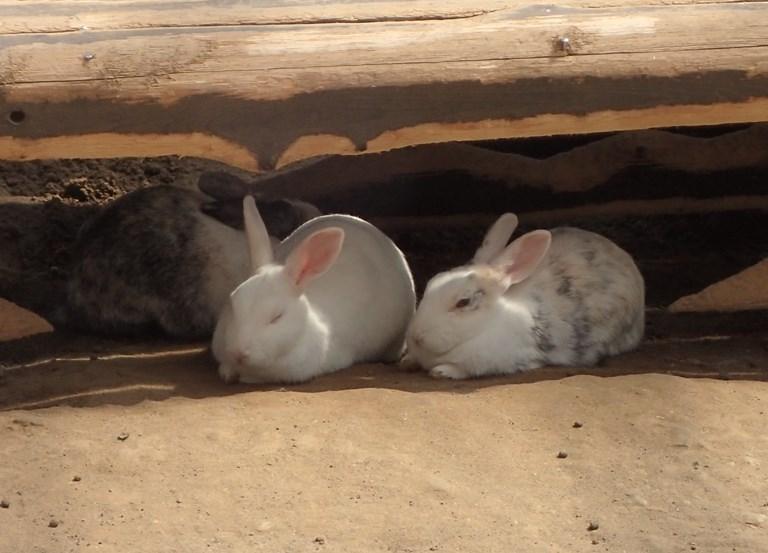 「9月3日 ~ 動物ふれあい広場のウサギさん ~ 」