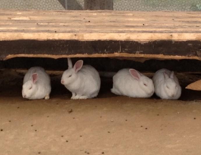 「7月6日 ~ 小屋の中のウサギさん ~ 」