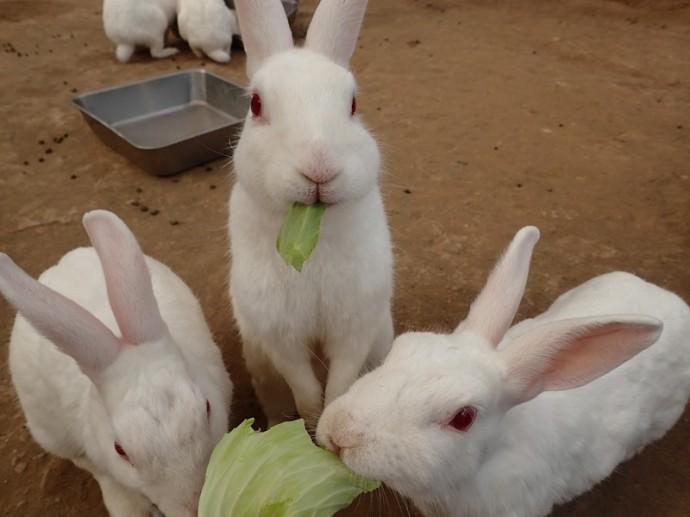 「 ~ ウサギさんモグモグ ~ 」