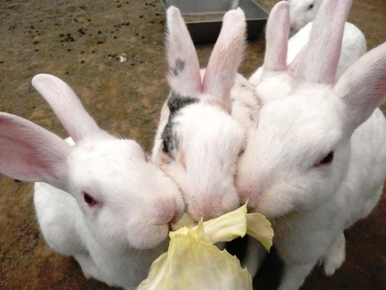 「5月16日 ~動物ふれあい広場のウサギたち~