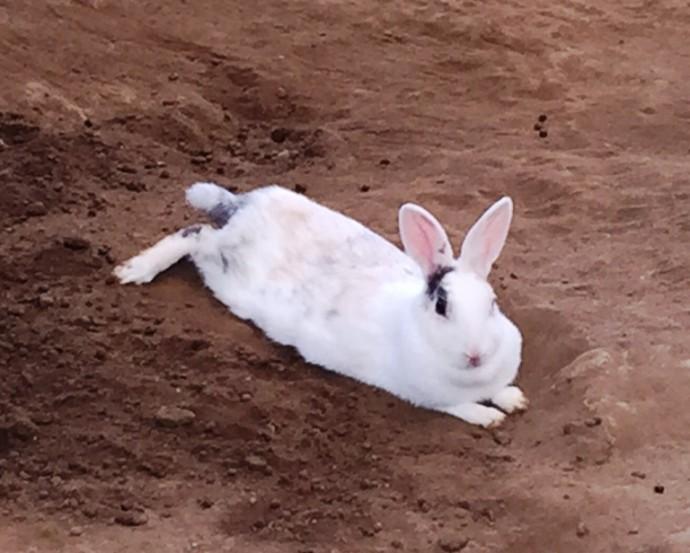 「~動物ふれあい広場のウサギさん~」