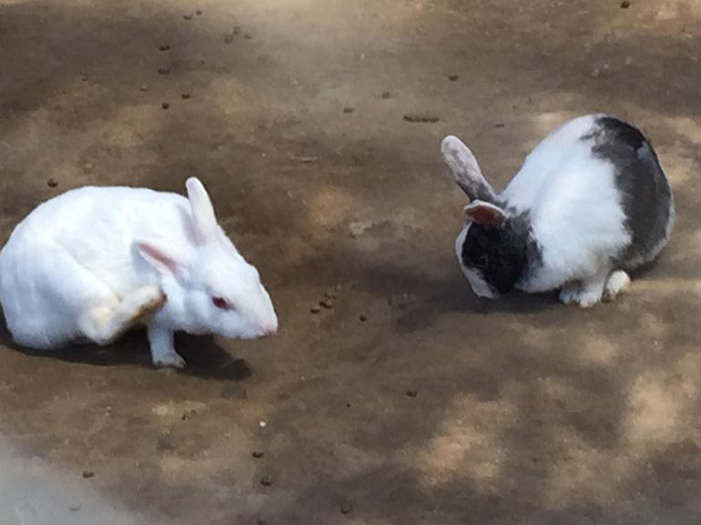 「 ~ 小屋の中のウサギさん ~ 」