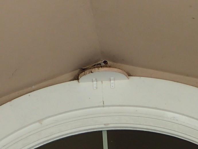 「 ~ ツバメさんが巣作り中です! ~ 」