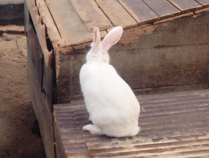 5月15日 ~ 本日のウサギさん ~ 」