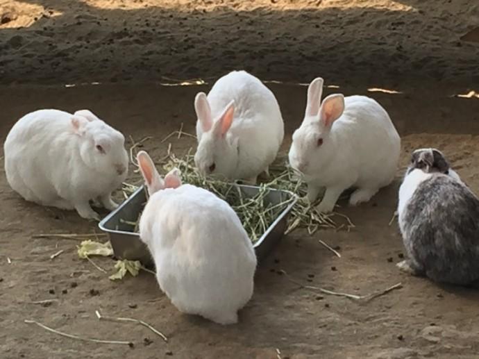「 ~ 本日のウサギさんたち ~ 」