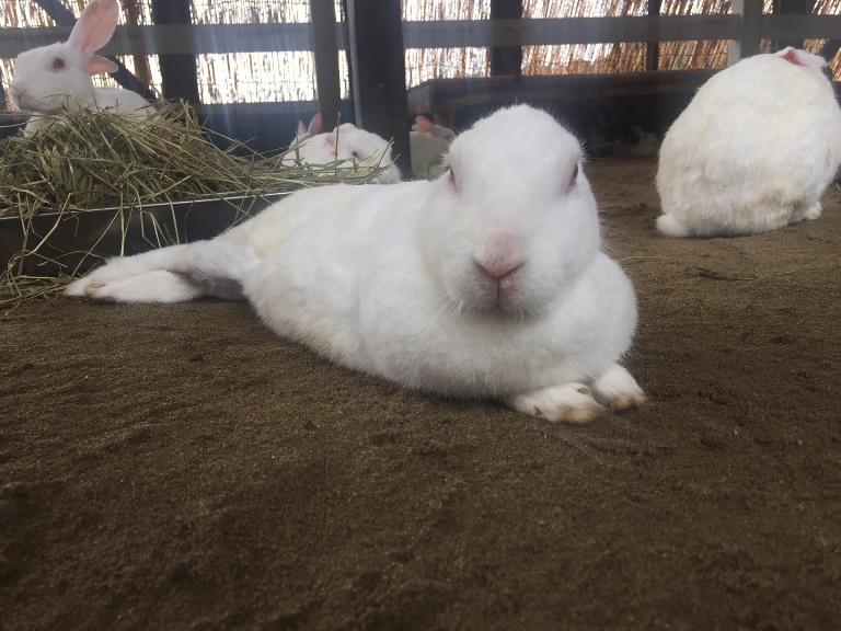 「 ~ 夏バテ気味のウサギさん ~ 」