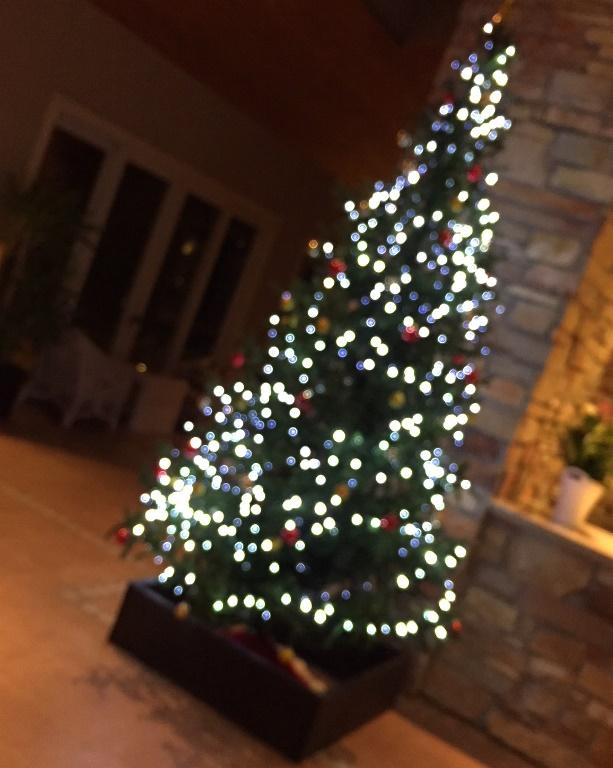 「 ~ クリスマスツリーを飾りつけました! ~ 」
