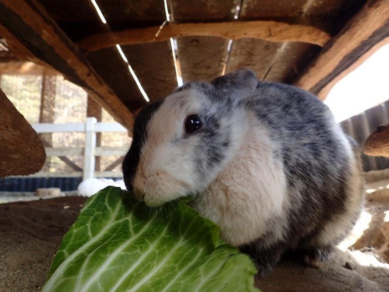 ~ ウサギさん② ~