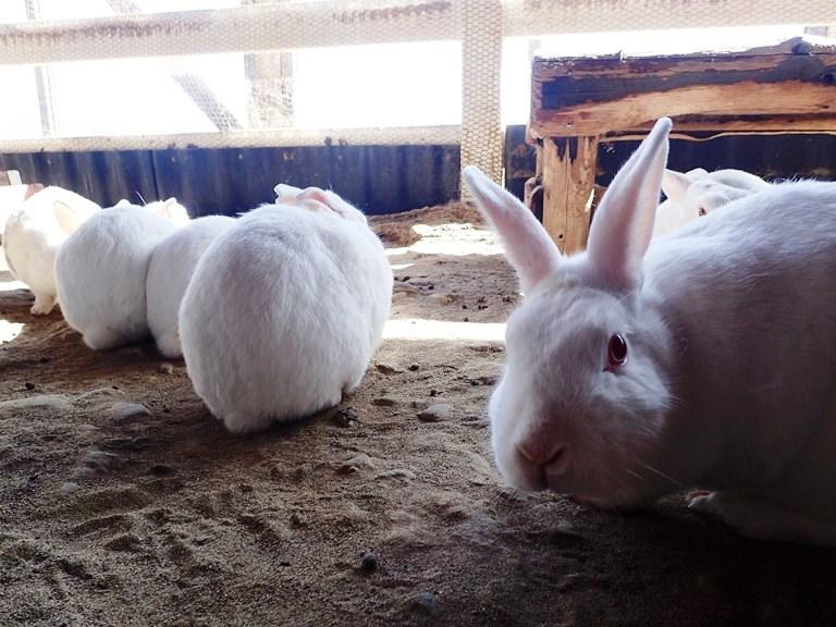 ~ ウサギさん① ~