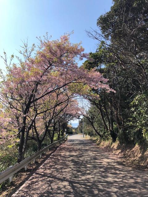~ 八幡岬公園に向かう下り坂にて ~