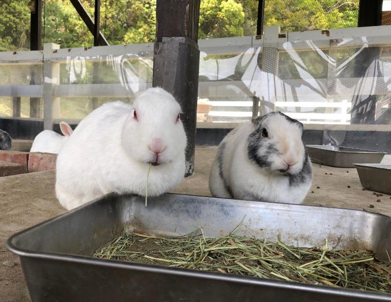 ~ ウサギ小屋より ~